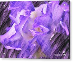Purple Iris Flower Abstract Acrylic Print by Judy Palkimas