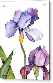 Purple Iris Leaning Toward The Sun Acrylic Print by Sandy Linden