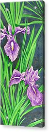 Purple Iris Acrylic Print by Richard De Wolfe