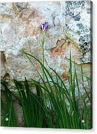 Purple Iris Acrylic Print by Robert Lozen