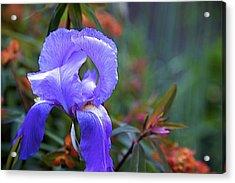 Purple Iris Acrylic Print by Terry Horstman