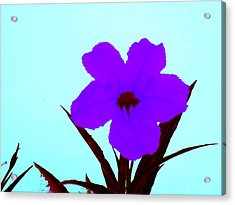 Purple Jack Flower Acrylic Print