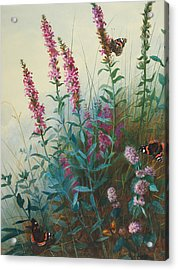 Purple Loosestrife And Watermind Acrylic Print by Archibald Thorburn