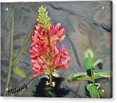 Acrylic Print featuring the painting Purple Loosestrife by Michael Daniels