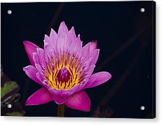 Purple Lotus Flower Acrylic Print
