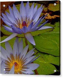 Lotus I Acrylic Print by Kim Pippinger
