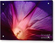 Purple... Acrylic Print by Ludek Sagi Lukac