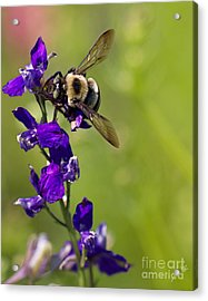 Purple Majesty Acrylic Print by Erika Weber