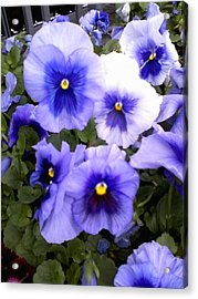 Acrylic Print featuring the photograph Purple Morning Glory by Fortunate Findings Shirley Dickerson