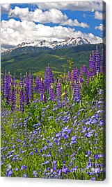 Purple Mountain Majesty Acrylic Print