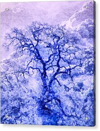 Purple Oak Tree Dream  Acrylic Print