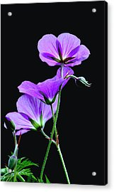 Purple On Black Acrylic Print