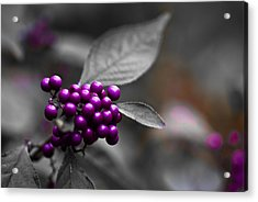 Purple Only Acrylic Print by Samantha Eisenhauer