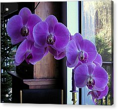 Acrylic Print featuring the photograph Purple Orchid by AJ  Schibig