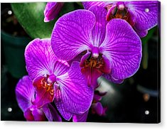 Purple Orchid Glow Acrylic Print