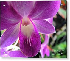 Acrylic Print featuring the photograph Purple Orchid by Kristine Merc
