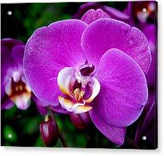 Purple Orchid Acrylic Print by Rona Black
