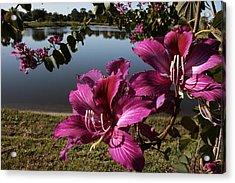 Purple Orchid Tree  Acrylic Print by Regina  Williams