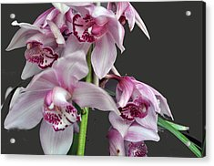 Purple Orchids Acrylic Print by Judith Russell-Tooth