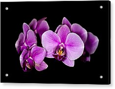 Acrylic Print featuring the photograph Purple Orchids by Len Romanick