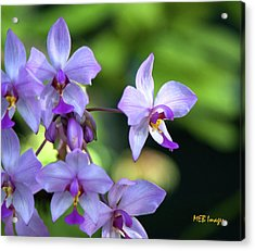 Purple Orchids Acrylic Print