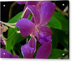 Purple Over Green Acrylic Print