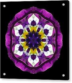 Purple Pansy II Flower Mandala Acrylic Print