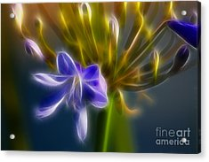 Purple Passion 6318-fractal Acrylic Print by Gary Gingrich Galleries
