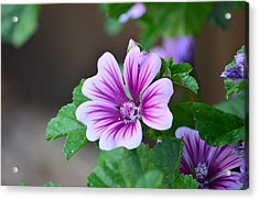 Purple Passion Acrylic Print by Jennifer  King