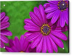 Purple Passion Acrylic Print by Joan Herwig