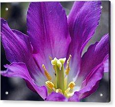 Purple Passion Acrylic Print by Leslie Cruz