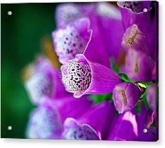 Purple Passion Acrylic Print by Tammy Smith