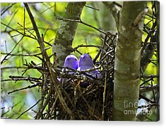 Purple Peeps Pair Acrylic Print by Al Powell Photography USA