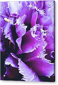Purple Perfection Acrylic Print by Nadalyn Larsen