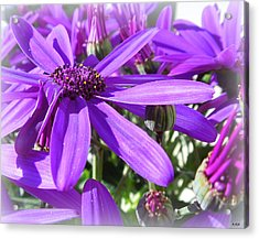 Purple Petals Acrylic Print by Heidi Manly