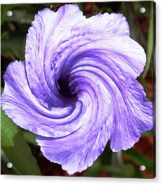 Purple Petunia Twirl Acrylic Print by Belinda Lee