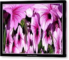 Purple Petunias Abstract Acrylic Print by Rose Santuci-Sofranko