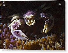 Purple Pocelain Acrylic Print by Soren Egeberg