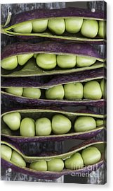 Purple Podded Pea Pattern Acrylic Print by Tim Gainey