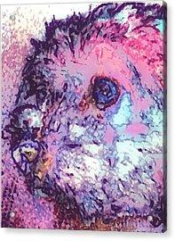 Purple Pooch Acrylic Print by Lady Ex