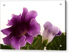 Purple Power Acrylic Print by Robert Culver