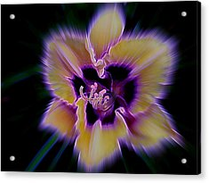 Purple Radiance Acrylic Print by Shirley Sirois