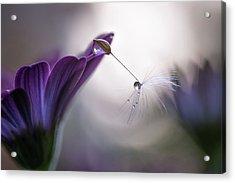 Purple Rain Acrylic Print by Silvia Spedicato