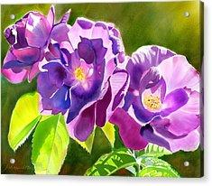 Purple Roses Acrylic Print by Joan A Hamilton