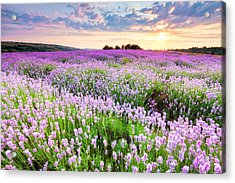 Purple Sea Acrylic Print