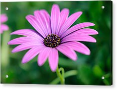 Purple Smile Acrylic Print by Ivelin Donchev