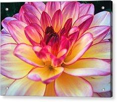 Purple Star Flower Acrylic Print by Beril Sirmacek