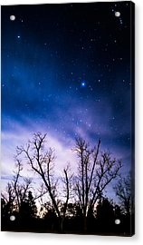 Purple Stars Acrylic Print by Shelby  Young