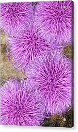 Purple Thistle - 2 Acrylic Print