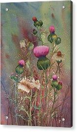 Purple Thistle Acrylic Print